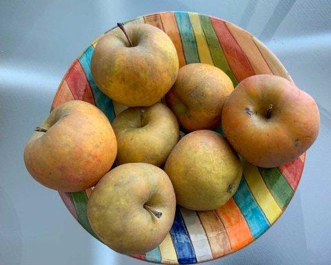 poma bruna de muntanya de Solonès